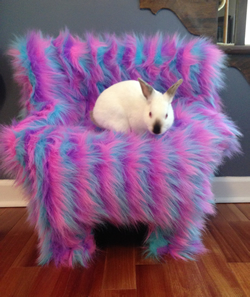 Bunny sitting on chair