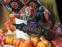Black bunny in a Halloween basket surrounded by tiny pumpkins.